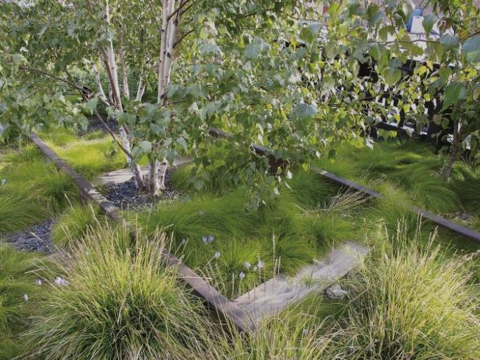 Nazwa:  Pietoudolf-planting-book-4(carex eburnea).jpg Wyświetleń: 161 Rozmiar:  95,5 KB